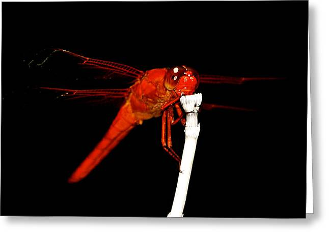 Greeting Card featuring the photograph Fire Red Dragon by Peggy Franz