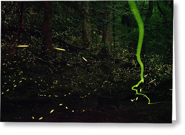 Fireflies Flash And Streak Greeting Card