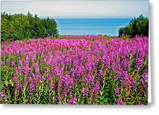 Greeting Card featuring the photograph Fireweed Along Cook Inlet In Kenai Peninsula-alaska by Ruth Hager