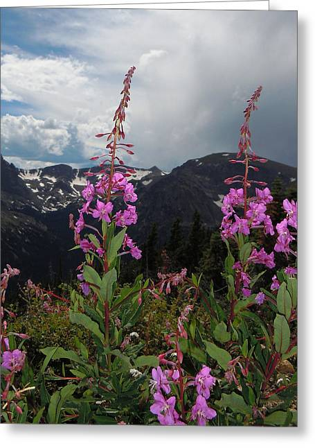 Fireweed And Hayden Spire Greeting Card by Heather Coen