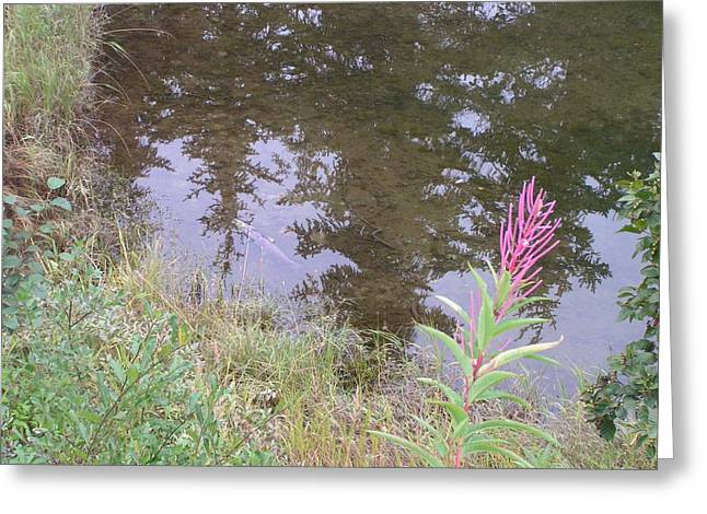 Fireweed And Salmon. Greeting Card