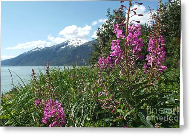 Fireweed At Yakutania Point Greeting Card
