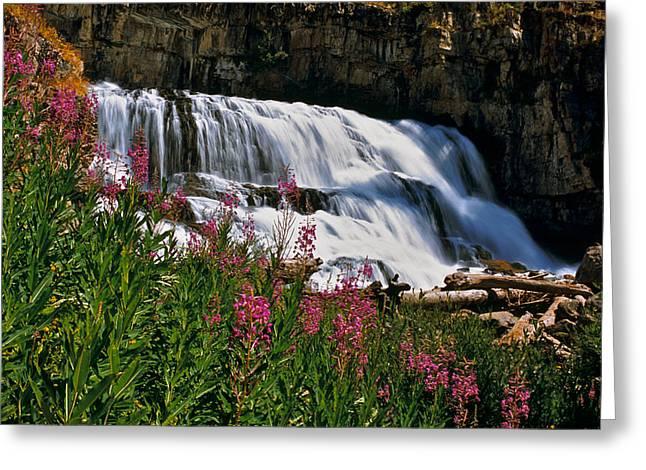 Fireweed Blooms Along The Banks Of Granite Creek Wyoming Greeting Card