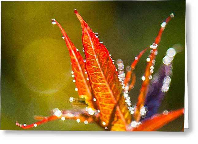 Fireweed Greeting Card