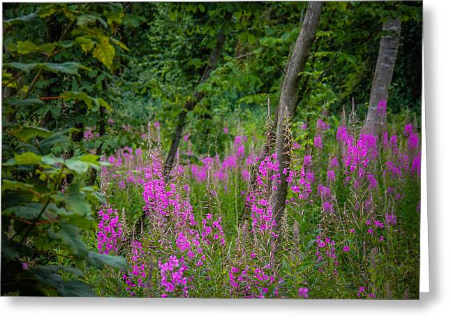 Fireweed In The Irish Countryside Greeting Card