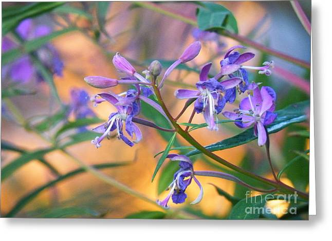 Fireweed Number Three Greeting Card