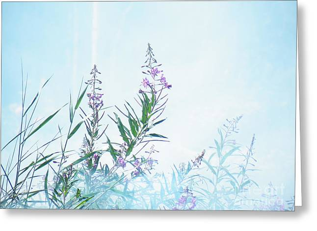 Fireweed Number Two Greeting Card