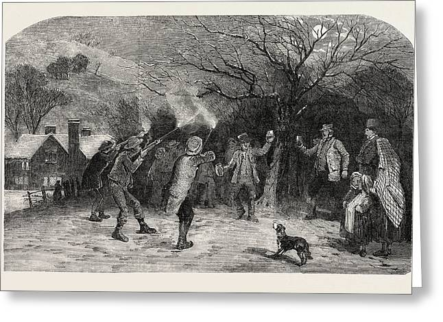 Firing At The Apple Tree, In Devonshire, Uk Greeting Card