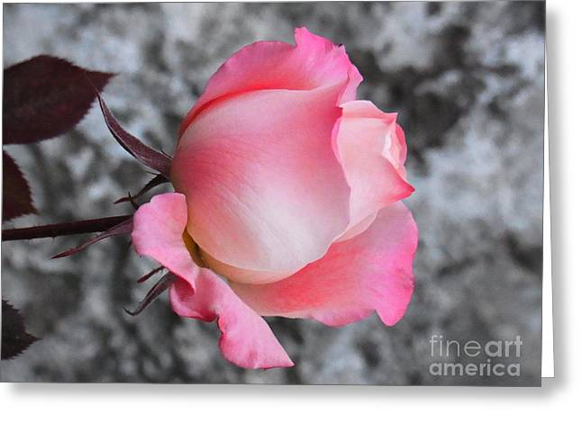 Greeting Card featuring the photograph First Blush by Agnieszka Ledwon