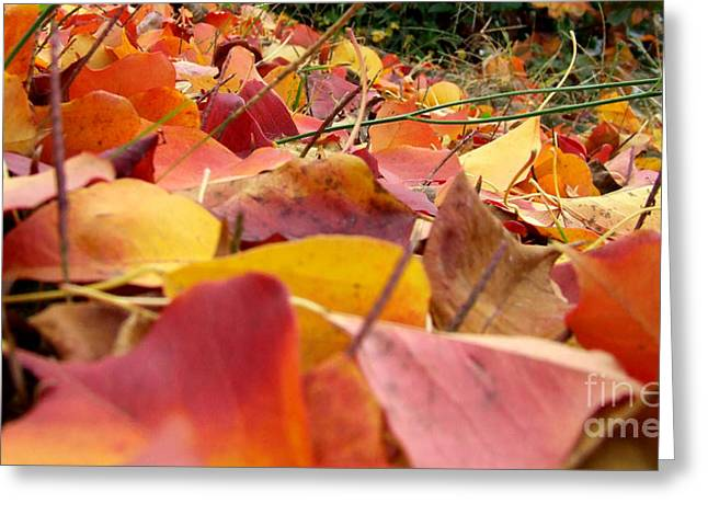 Greeting Card featuring the photograph First Day Of Fall by Andrea Anderegg