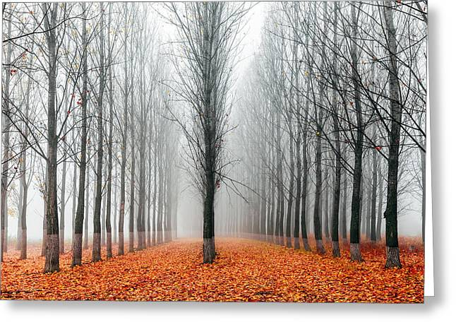 First In The Line Greeting Card by Evgeni Dinev