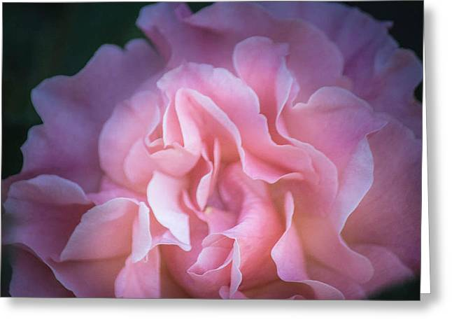 Greeting Card featuring the photograph First Light by Patricia Babbitt