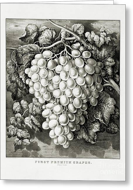 First Premium Grapes - A Royal Cluster - 1865 Greeting Card