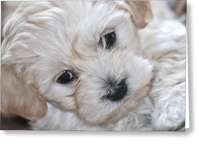 First Puppy Portrait Greeting Card