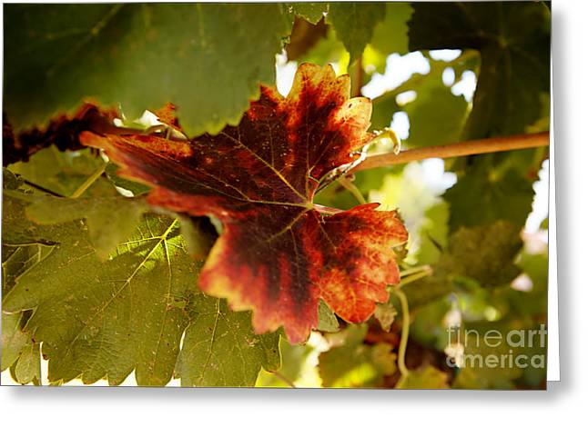 First Signs Of Autumn Greeting Card by Dry Leaf