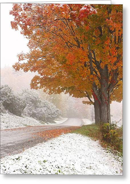 First Snow Greeting Card by Butch Lombardi