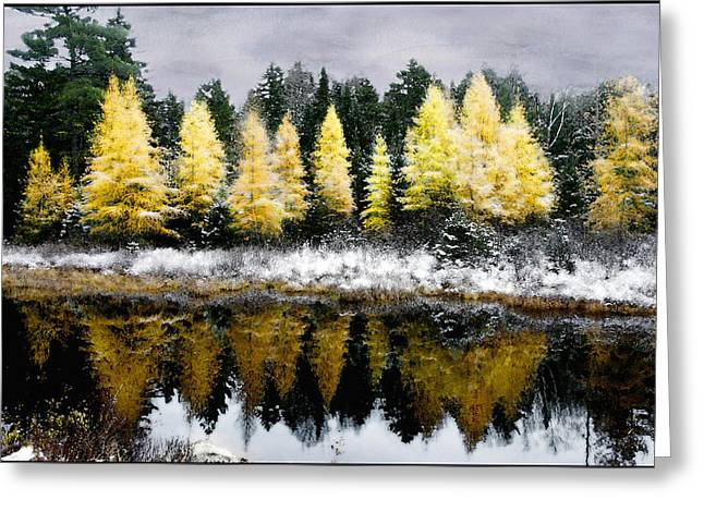 Tamarack Under A Painted Sky Greeting Card