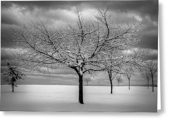 First Snow Greeting Card by Randy Hall