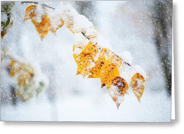 First Snow With Autumn Leaves Greeting Card