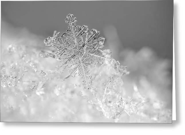 First Snowflake Greeting Card