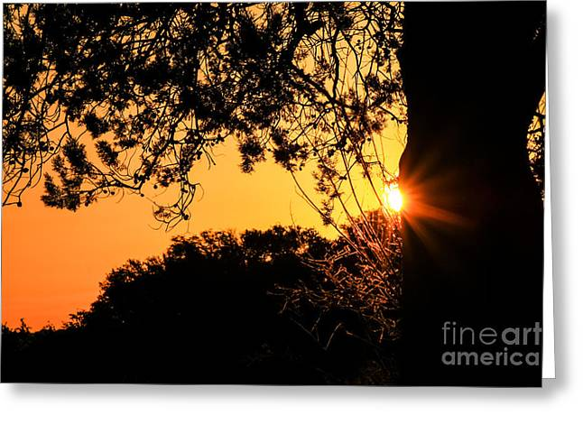 First Sunrise Of A New Year Greeting Card
