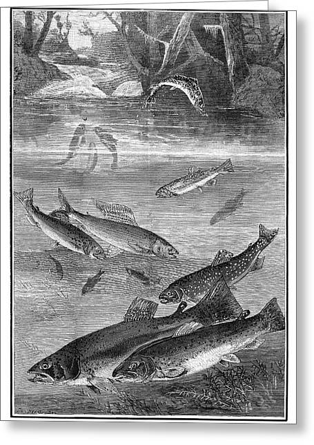 Fish, 1880 Greeting Card by Granger