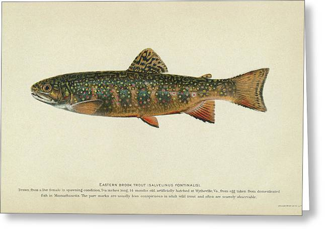 Fish Brook Trout Greeting Card