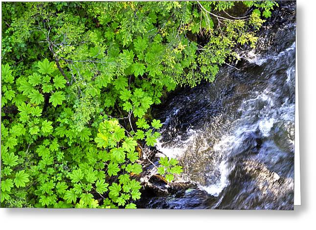 Fish Creek In Summer Greeting Card