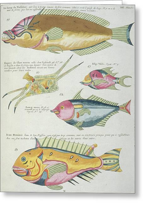 Fish Illustrations Greeting Card