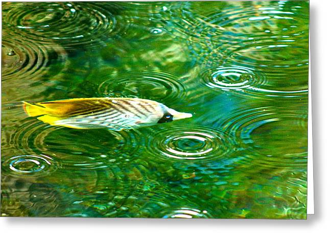Fish In The Rain Greeting Card