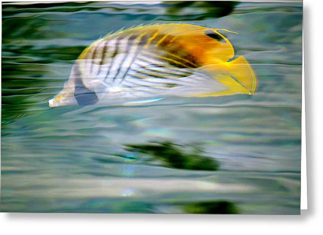 Fish In The Sunlight Greeting Card by Lehua Pekelo-Stearns