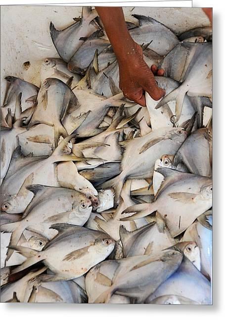 Fish Market Greeting Card by Money Sharma