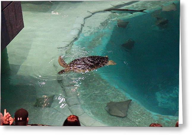 Fish - National Aquarium In Baltimore Md - 121210 Greeting Card by DC Photographer