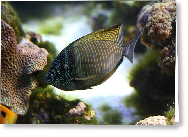 Fish - National Aquarium In Baltimore Md - 1212109 Greeting Card by DC Photographer