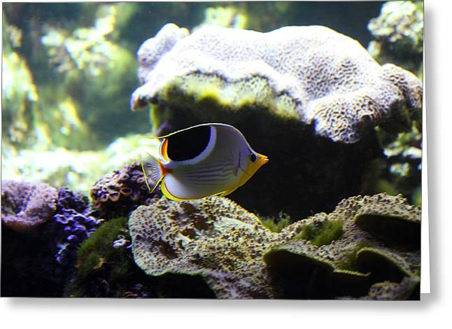 Fish - National Aquarium In Baltimore Md - 1212112 Greeting Card