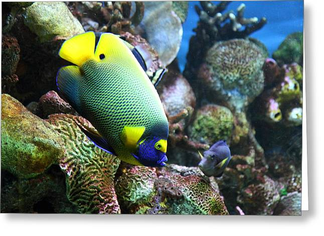 Fish - National Aquarium In Baltimore Md - 1212115 Greeting Card by DC Photographer