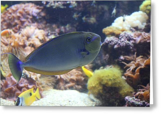 Fish - National Aquarium In Baltimore Md - 1212121 Greeting Card by DC Photographer