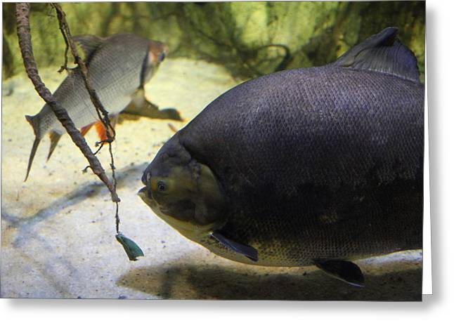 Fish - National Aquarium In Baltimore Md - 1212125 Greeting Card by DC Photographer