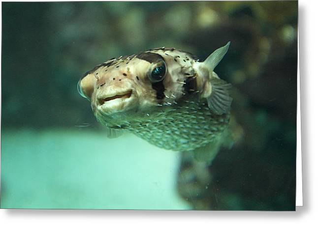 Fish - National Aquarium In Baltimore Md - 1212135 Greeting Card by DC Photographer