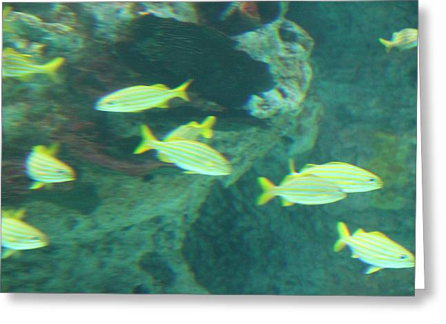 Fish - National Aquarium In Baltimore Md - 1212141 Greeting Card by DC Photographer