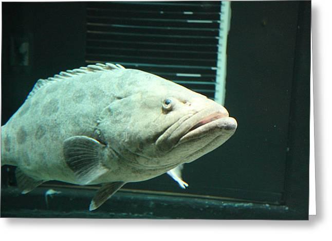 Fish - National Aquarium In Baltimore Md - 1212145 Greeting Card