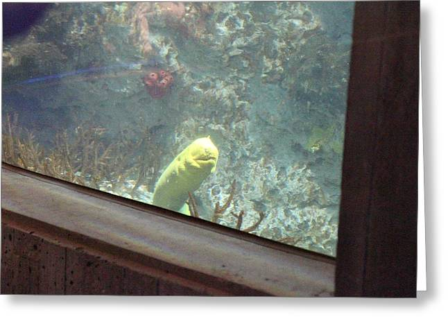 Fish - National Aquarium In Baltimore Md - 121219 Greeting Card by DC Photographer