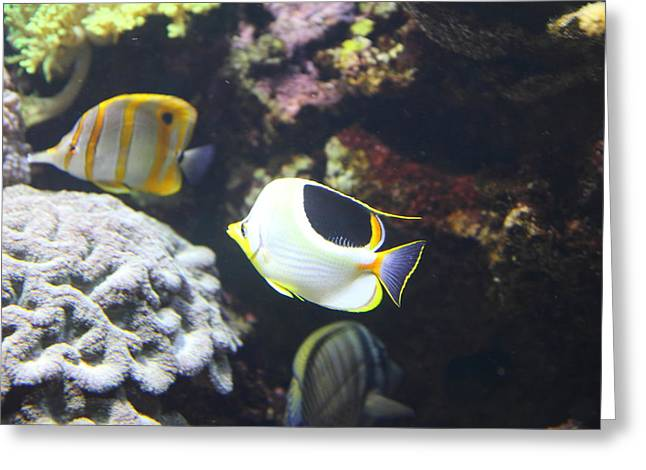 Fish - National Aquarium In Baltimore Md - 121239 Greeting Card by DC Photographer