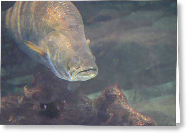 Fish - National Aquarium In Baltimore Md - 121268 Greeting Card by DC Photographer