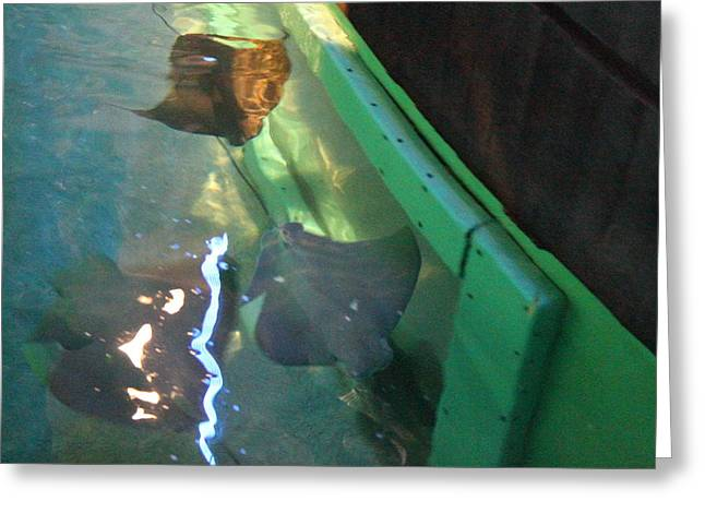 Fish - National Aquarium In Baltimore Md - 12127 Greeting Card by DC Photographer