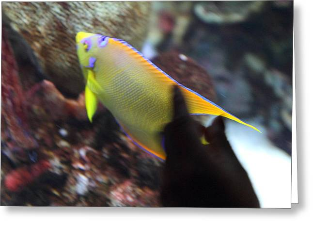 Fish - National Aquarium In Baltimore Md - 121272 Greeting Card