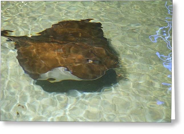 Fish - National Aquarium In Baltimore Md - 121278 Greeting Card
