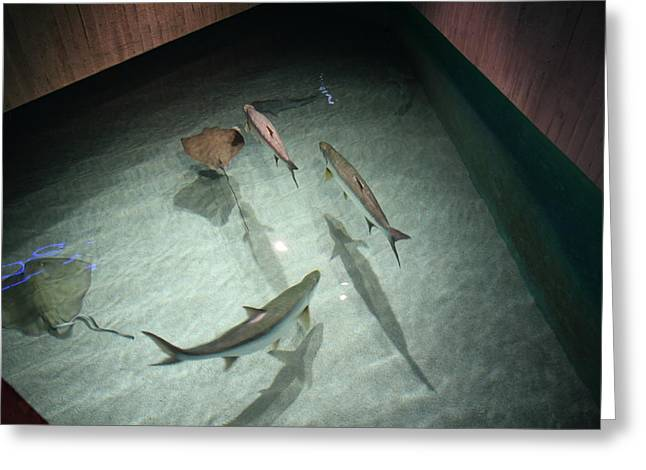 Fish - National Aquarium In Baltimore Md - 121283 Greeting Card by DC Photographer