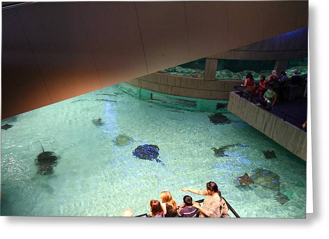 Fish - National Aquarium In Baltimore Md - 121286 Greeting Card by DC Photographer