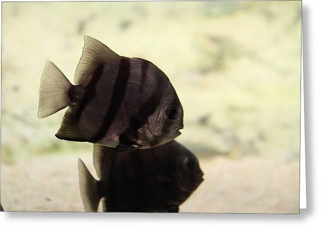 Fish - National Aquarium In Baltimore Md - 121288 Greeting Card